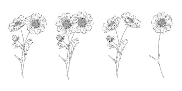 Vector schwarzweiss-konturnblumenanordnung mit kamillenblumen Premium Vektoren