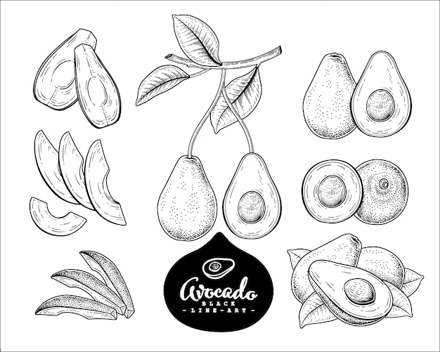 Vector sketch avocado dekoratives set. handgezeichnete botanische illustrationen. Premium Vektoren