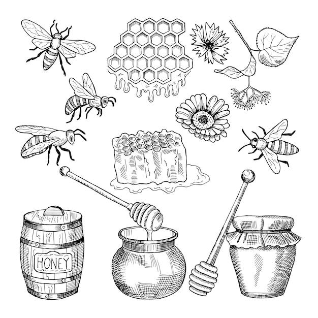 Vektor hand gezeichnete bilder von honigprodukten Premium Vektoren