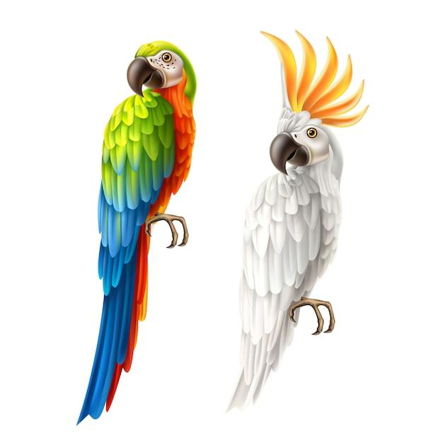 Vektor realistische papageien ara und kakadu eingestellt Premium Vektoren