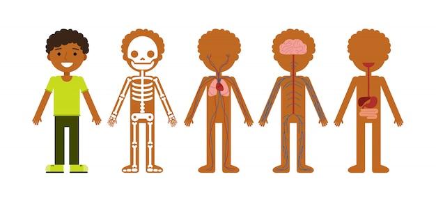 Vektorabbildung der körperanatomie. Premium Vektoren