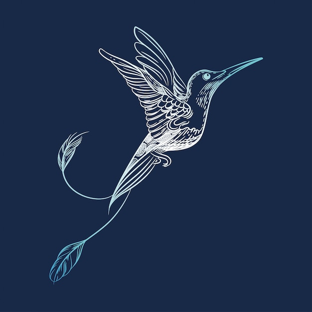 Vektorbild eines kolibris Premium Vektoren