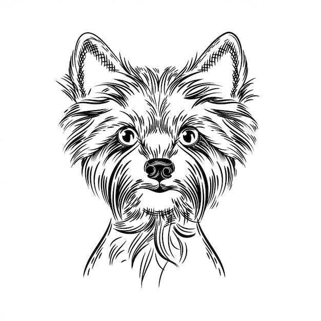 Vektorbild eines yorkshire-terriers Premium Vektoren
