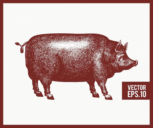 Vektorhand gezeichnete illustration des schattenbildes des schwarzen schweins. retro-gravurstil. skizze vieh zeichnung. Premium Vektoren
