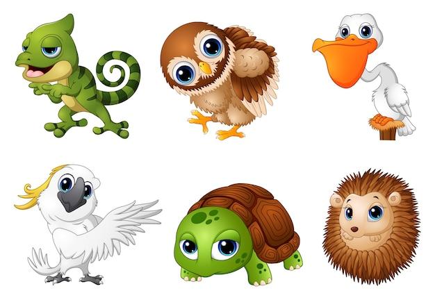 Vektorillustration von den karikaturen des wilden tieres eingestellt Premium Vektoren