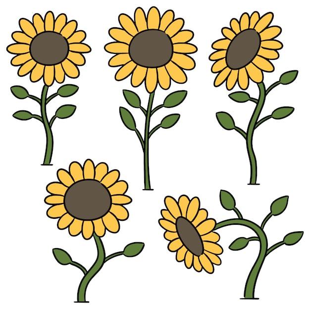 Vektorsatz der sonnenblume Premium Vektoren