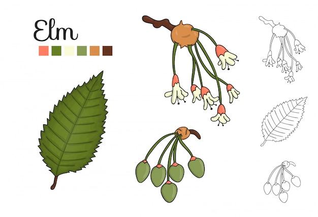 Vektorsatz ulmenbaumelemente lokalisiert. botanische illustration des ulmenblattes, brunch, blumen, schlüsselfrüchte. schwarz-weiß-clipart Premium Vektoren