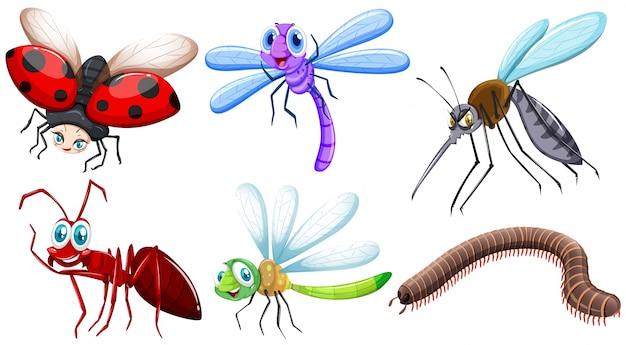 Verschiedene art von insekten illustration Kostenlosen Vektoren