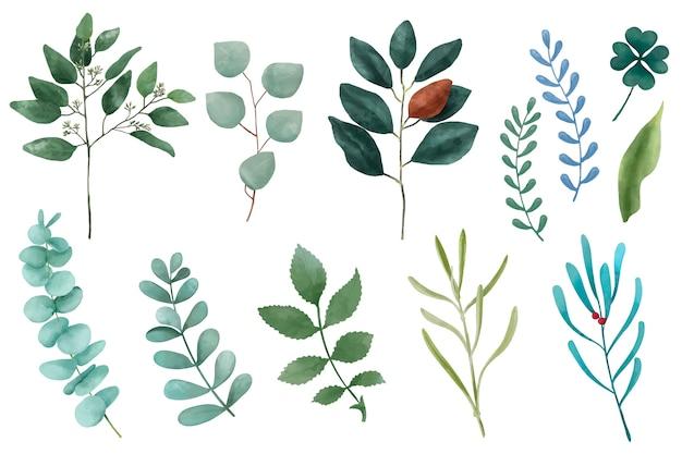 Verschiedene arten der dargestellten pflanzenblätter lokalisiert auf weißem hintergrund. Kostenlosen Vektoren