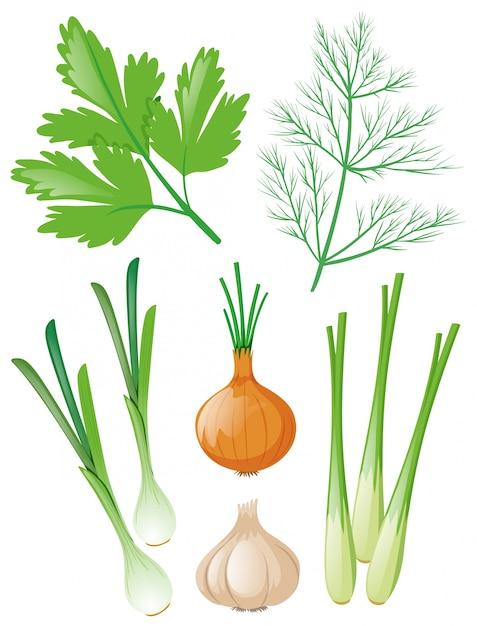 Verschiedene arten von gemüse auf weiß Kostenlosen Vektoren