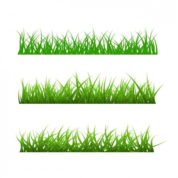Verschiedene arten von gras Kostenlosen Vektoren