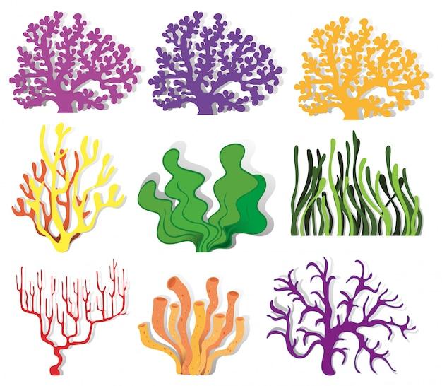 Verschiedene arten von korallenriffen Kostenlosen Vektoren