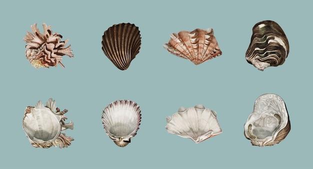 Verschiedene arten von mollusken illustriert Kostenlosen Vektoren