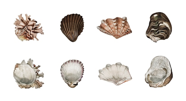Verschiedene arten von mollusken von charles dessalines d orbigny (1806-1876) illustriert. Kostenlosen Vektoren