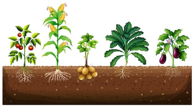 Verschiedene arten von pflanzen wachsen im garten Premium Vektoren