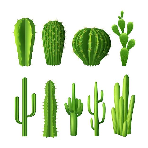 Verschiedene arten von realistischen dekorativen ikonen der kaktuspflanzen eingestellt Kostenlosen Vektoren