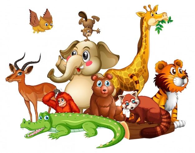 Verschiedene arten von tieren auf weiß Kostenlosen Vektoren