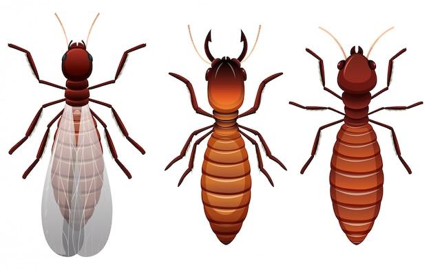 Verschiedene stadien einer termite Premium Vektoren