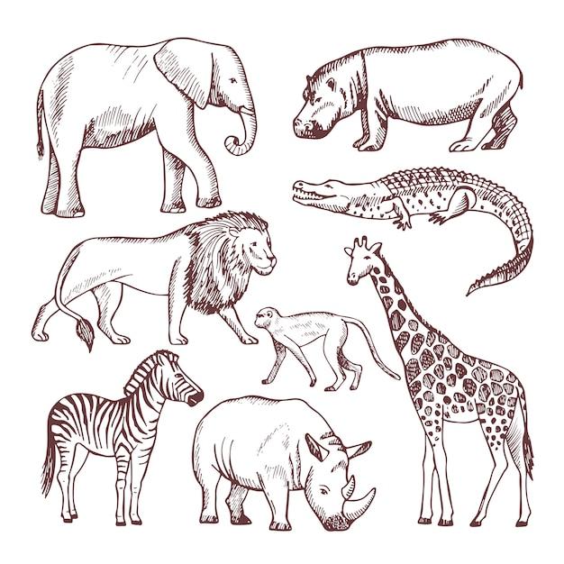 Verschiedene tiere aus savana und afrika Premium Vektoren