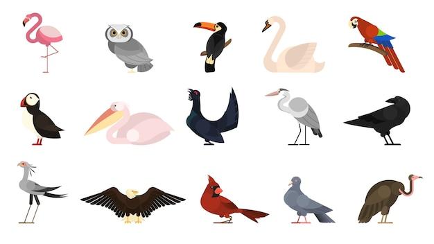 Verschiedene vogelsets. sammlung von wildvögeln Premium Vektoren