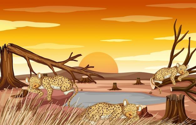 Verschmutzungsbekämpfungsszene mit tigern und dürre Premium Vektoren