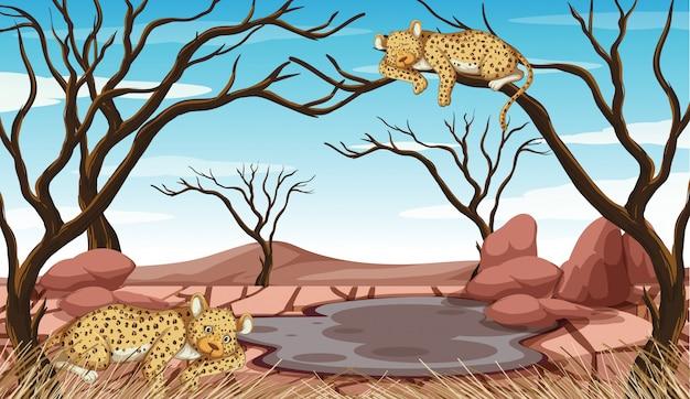 Verschmutzungsbekämpfungsszene mit tigern und dürre Kostenlosen Vektoren