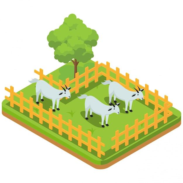 Vieh einschließlich ziegen im fahrerlager Premium Vektoren