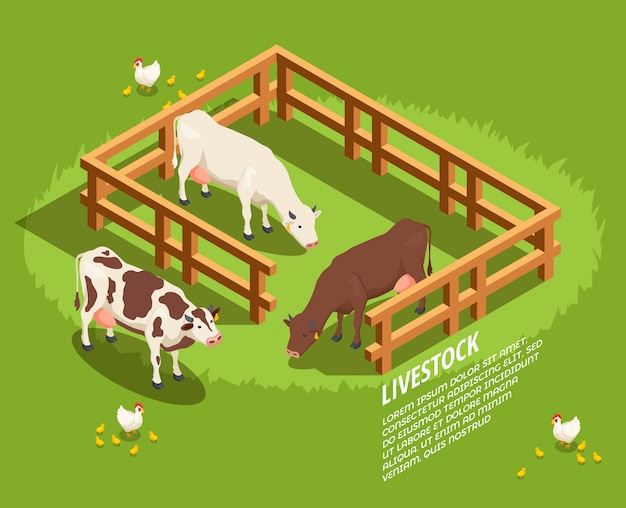 Vieh isometrische szene Kostenlosen Vektoren