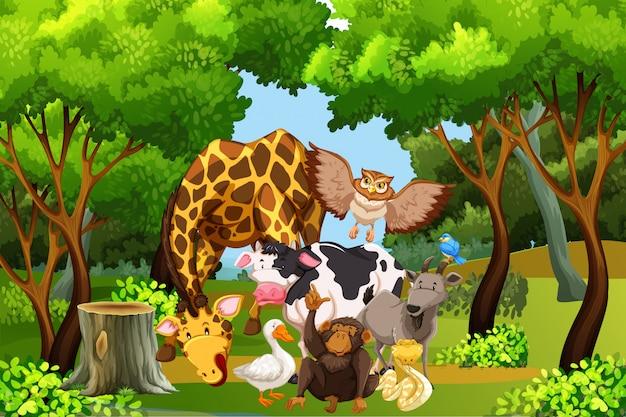 Viele tiere im wald Premium Vektoren
