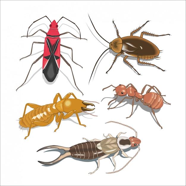Viele verschiedene insekten Premium Vektoren