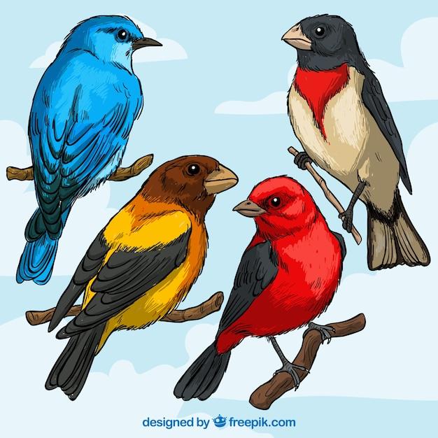 Vielfalt der vogelrassen Kostenlosen Vektoren