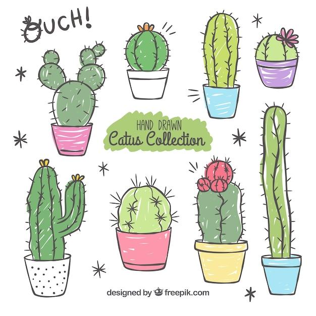 vielfalt von hand gezeichneten kaktus download der kostenlosen vektor. Black Bedroom Furniture Sets. Home Design Ideas