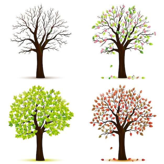 vier jahreszeiten bäume vektor  premiumvektor