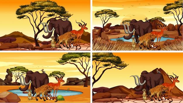 Vier szenen mit afrikanischen tieren Kostenlosen Vektoren