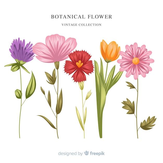 Vintage botanische blumensammlung Kostenlosen Vektoren