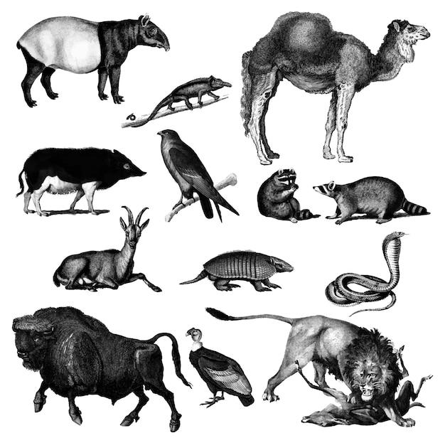 Vintage illustrationen von tieren Kostenlosen Vektoren