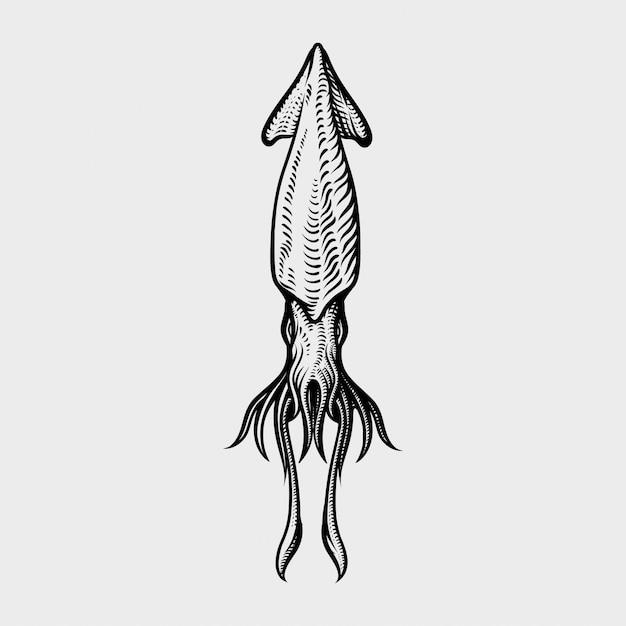 Vintage tintenfischzeichnung. hand gezeichnete einfarbige meeresfrüchteillustration Premium Vektoren
