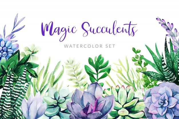 Violette kaktus- und sukkulentenpflanzen, horizontaler hintergrund Premium Vektoren