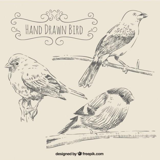 Vögel in der hand gezeichnet stil Kostenlosen Vektoren