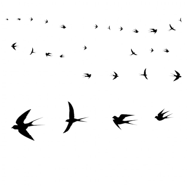 Vögel-symbole Premium Vektoren