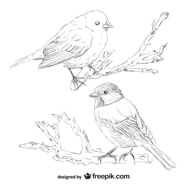Vogel retro Hand gezeichnete Vektor | Download der ...