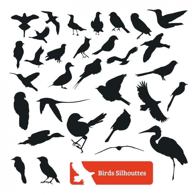 Vogel silhouette collection Kostenlosen Vektoren