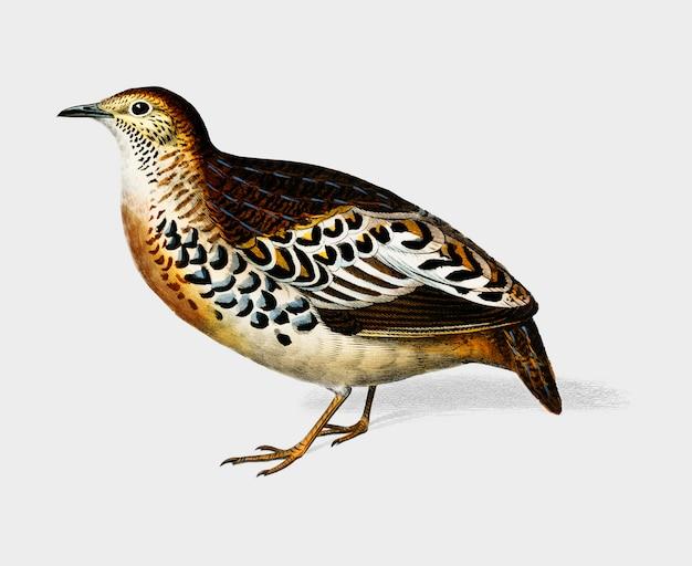 Vogel Kostenlosen Vektoren