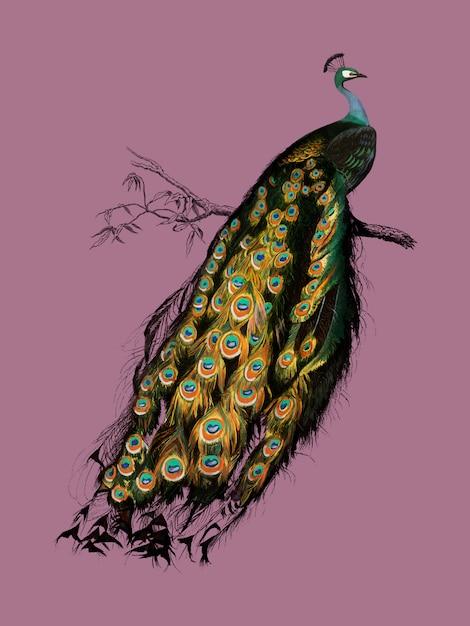 vögel bilder kostenlos  malvorlagen gratis