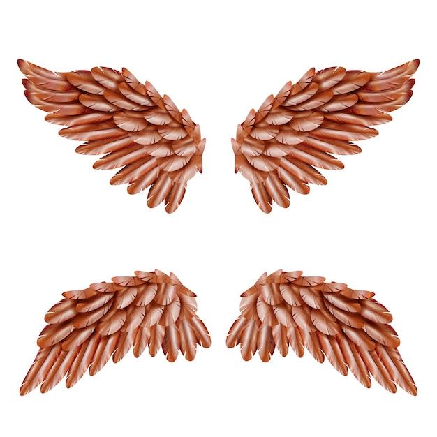 Vogelflügel set Kostenlosen Vektoren