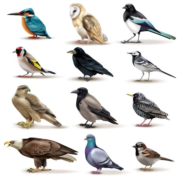 Vogelsatz von zwölf lokalisierten bildern von bunten vögeln mit verschiedenen spezies auf freiem raum Kostenlosen Vektoren