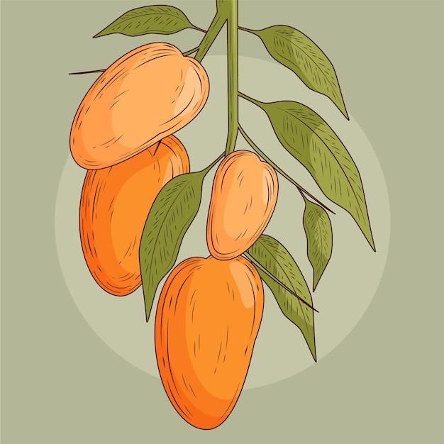 Vorderansicht des botanischen mangobaums Kostenlosen Vektoren