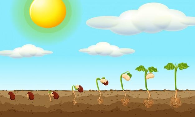 Wachsende pflanze aus samen in den boden Kostenlosen Vektoren