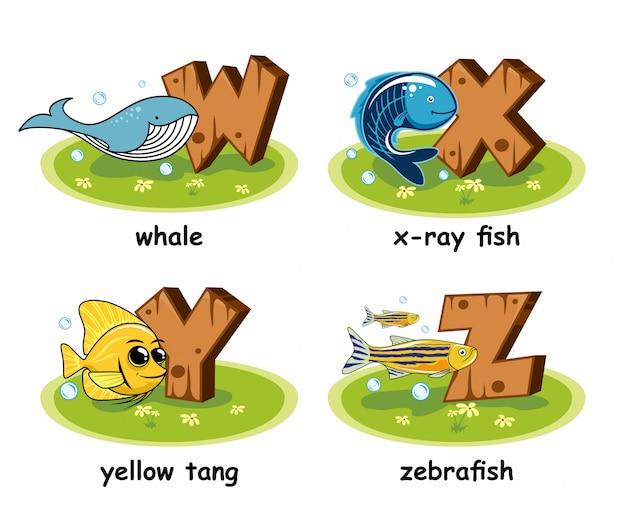 Wal röntgen röntgen tetra fisch yellow tang zebrafisch holz alphabet Premium Vektoren
