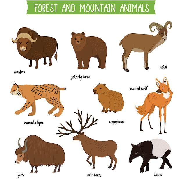 Wald- und gebirgstiere lokalisierten vektorsatz Premium Vektoren